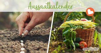 Wann kann man welche Pflanzen vorziehen, und zu welchem Zeitpunkt ist eine Aussaat ins Freiland sinnvoll? Hier erfährst du Monat für Monat, welche Gemüsesorten, Kräuter und Blumen jetzt gesät werden können.