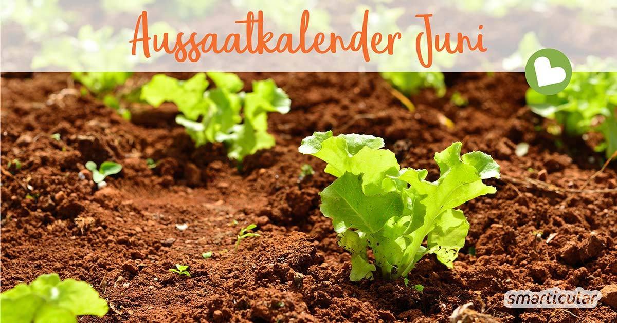 Im Juni setzt sich das warme Wetter durch, und im Garten beginnt allerlei zu sprießen und zu wachsen. Jetzt können zahlreiche Gemüse und Blumen direkt ins Beet gesät werden.