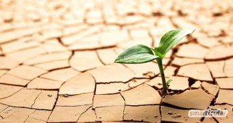 Grüne Oase und reichlicher Ertrag trotz Wassermangel: Diese Gemüsepflanzen, Blumen und Kräuter wachsen auch an trockenen Standorten bestens.