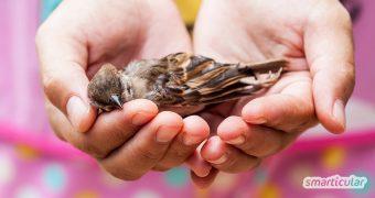 Wenn ein Vogel gegen die Fensterscheibe geflogen ist und benommen da liegt, kannst du ihm sehr einfach helfen, sich zu erholen.