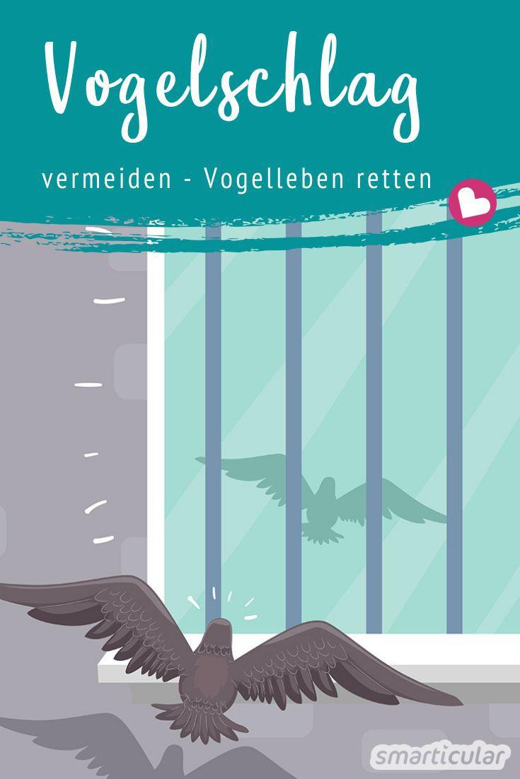 Vogelschlag zu vermeiden, bedeutet, Vögeln das Leben zu retten. Wie du mit einfachen Mitteln verhindern kannst, dass Vögel gegen deine Fenster fliegen, erfährst du hier.