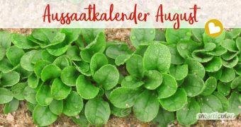 Im August werden viele Beetflächen wieder frei. In unserem Aussaatkalender für August findest du Gemüse, Kräuter und Blumen, die jetzt gesät oder vorgezogen werden können.