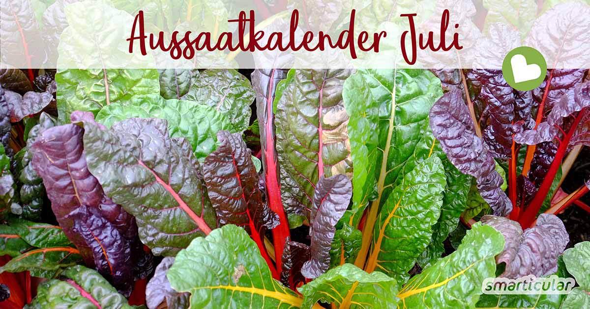 Im Aussaatkalender für Juli finden sich vor allem schnell wachsende und hitzeverträgliche Gemüsesorten. Für eine üppige Ernte im Herbst kann man jetzt mit dem Vorziehen beginnen.