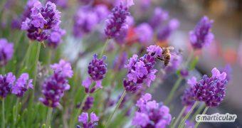 Mach aus deinem Garten oder Beet eine Bienenweide mit bienenfreundlichen Pflanzen! Ringelblumen, Sonnenblumen, Kräuter und Wildblumen bieten reichlich Nektar und Pollen.
