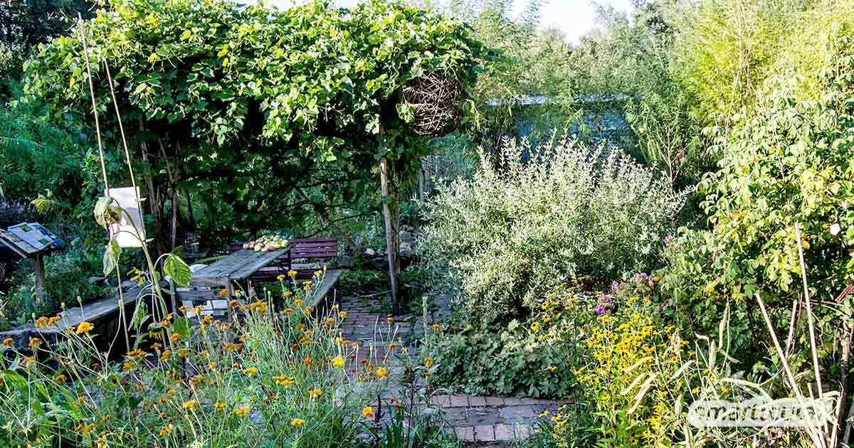 Permakultur-Prinzipien im eigenen Garten praktisch umsetzen