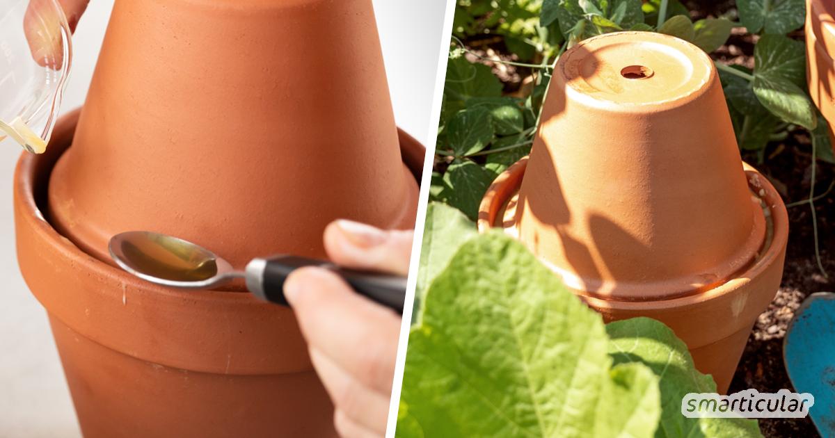 Ollas selber bauen: Bewässerung mit natürlicher Tropfschlauch-Alternative