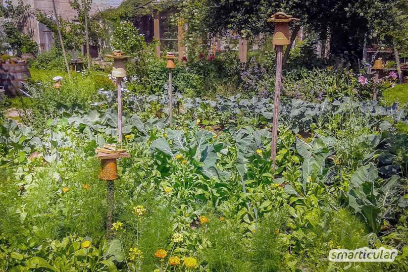 The permaculture principles help you to create, enjoy and harvest your own organic garden in a very practical way.