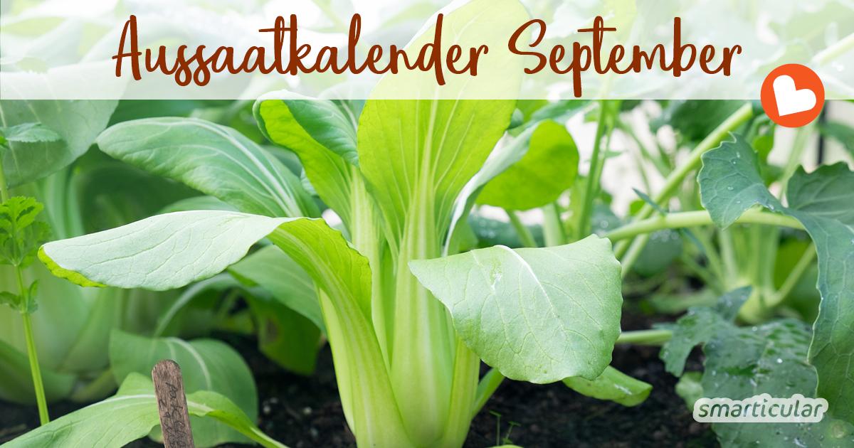 Im September sinken die Temperaturen langsam wieder. Vor allem Blattgemüse, aber auch einige Kräuter und Blumen können jetzt gesät werden.