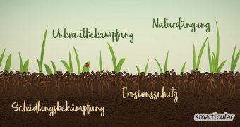 Eine Gründüngung schützt und verbessert den Boden und reichert ihn mit Nährstoffen an. Hier erfährst du, welche Vorteile Gründüngung im Biogarten hat und wie du sie Schritt für Schritt umsetzen kannst.