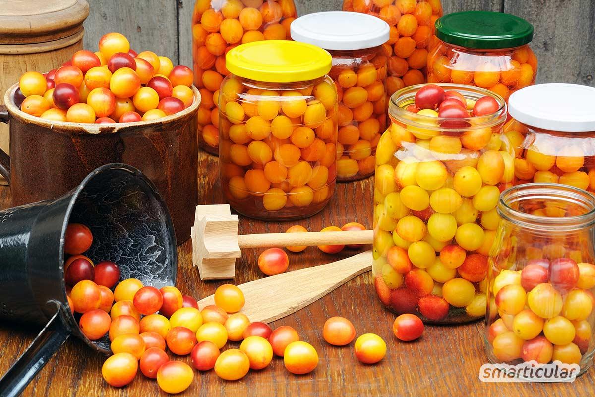 Hier findest du die besten Mirabellen-Rezepte, um die üppige Ernte zu verwerten: Mirabellenmarmelade, Mirabellenkuchen, Mirabellenkompott und sogar Mirabellensenf.