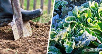 Wenn die Haupternte eingeholt ist, können die Beetflächen mit einer Nachkultur bepflanzt werden, um sie optimal zu nutzen. Viele Gemüsesorten gedeihen auch noch im Herbst und Winter.