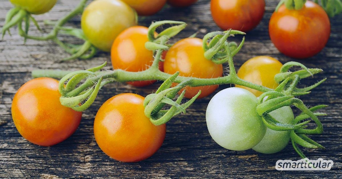 Grüne Tomaten nachreifen zu lassen, ist gar nicht schwer. Mit diesen Tipps verwandeln sich im Herbst die grünen Reste in rote, köstliche Tomaten.
