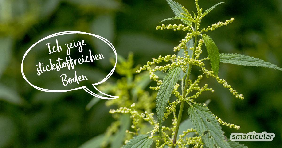 Statt aufwendig den pH-Wert der Gartenerde zu messen, kannst du einfach nach Zeigerpflanzen Ausschau halten. Sie verraten dir, ob der Boden lehmig, nährstoffreich oder sauer ist.