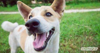 Der ökologische Pfotenabdruck eines Hundes kann beträchtlich sein! Mit diesen Tipps lebt dein Vierbeiner nicht nur umweltfreundlicher, sondern auch gesünder.