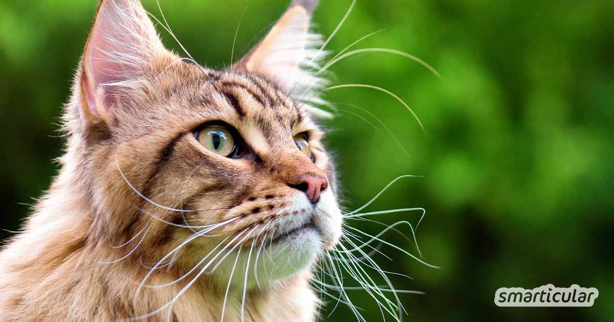 Herkömmliche Produkte für Katzen sind alles andere als nachhaltig. Mit diesen Alternativen lebt dein Stubentiger umweltfreundlicher und gesünder.