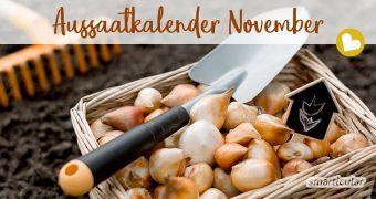 Im November wird es im Garten ruhiger. Trotzdem ist der Aussaatkalender auch jetzt nicht leer, und man kann für eine bunte Blumenpracht sowie eine frühere Ernte im neuen Gartenjahr sorgen.