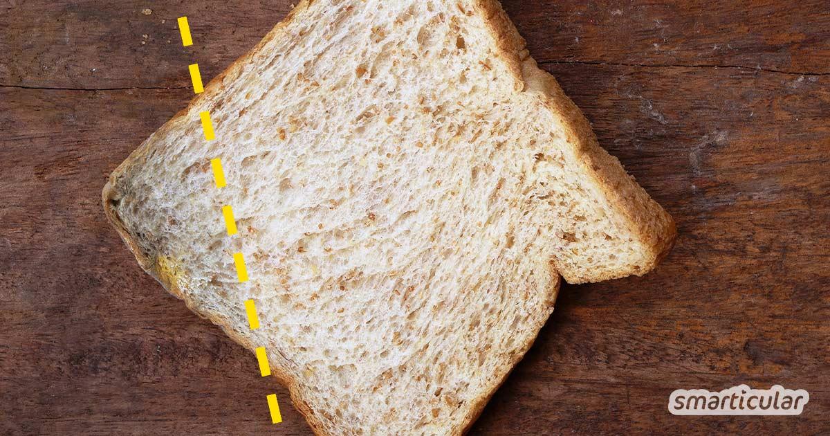 Schimmel auf Lebensmitteln stellt viele immer wieder vor die Frage: Kann ich das noch essen, oder muss ich das ganze Essen wegwerfen? Dieser Beitrag gibt darauf alle Antworten.