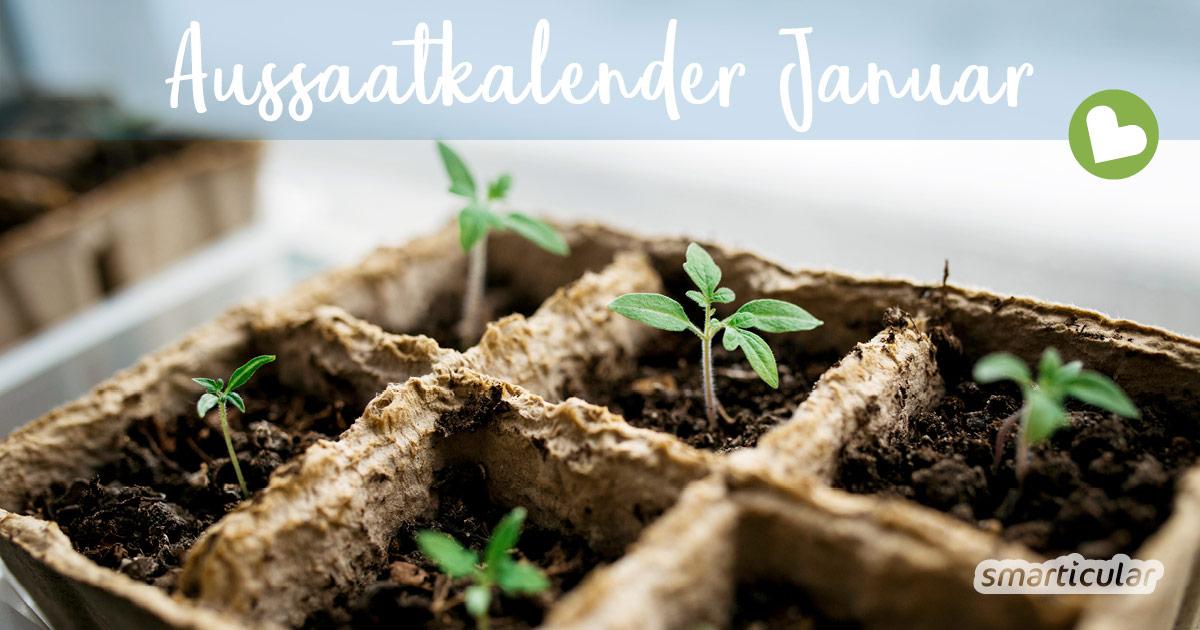 Aussaatkalender für Januar: Diese Gemüse, Kräuter und Blumen jetzt säen