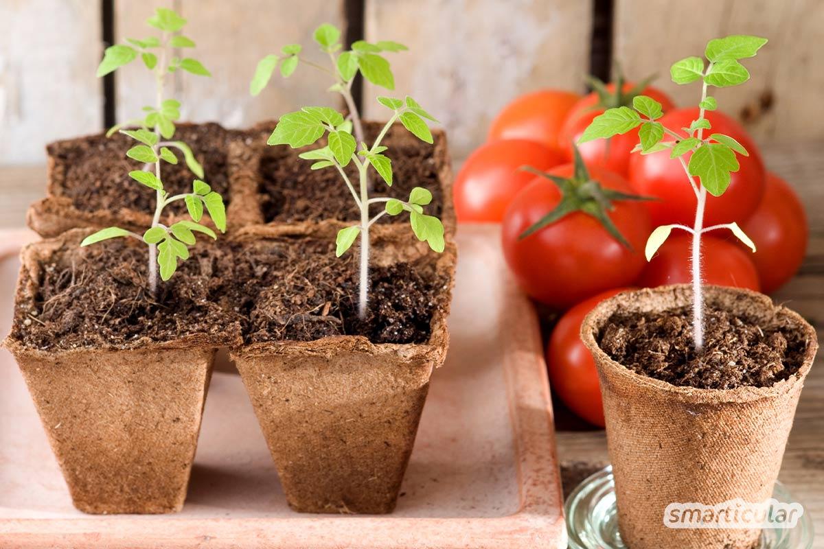 Im Februar können zahlreiche Gemüsesorten bereits vorgezogen werden. Und auch im Freiland darf die eine oder andere Saat schon jetzt direkt ins Beet.