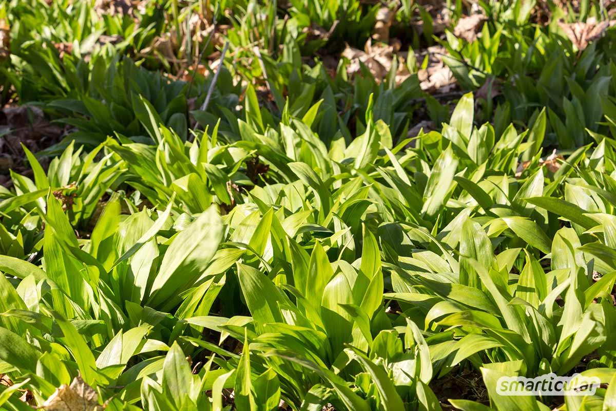 Einen verwilderten Garten neu zu gestalten und wieder nutzbar zu machen, erscheint sehr mühsam. Wenn du jedoch einen naturnahen Garten nach den Prinzipien der Permakultur anlegst, kannst du dir viel Arbeit sparen.