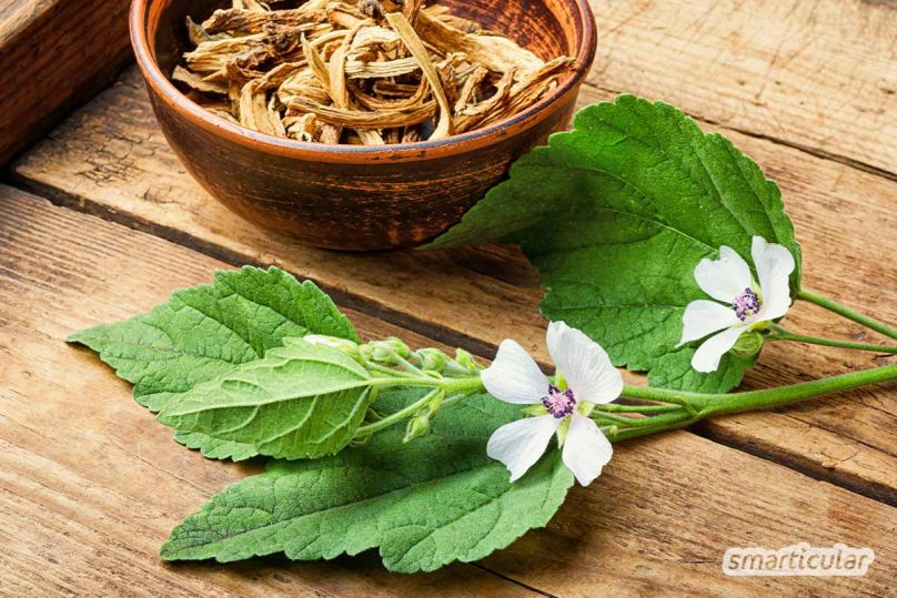 Bei Husten, Reizhusten, verschleimten Bronchien und anderen Erkältungssymptomen helfen zahlreiche Heilpflanzen, die Atemwege natürlich zu befreien.