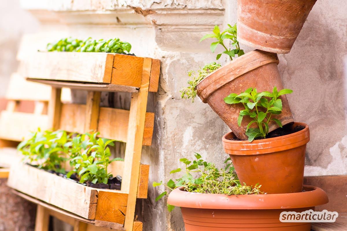 Einen Balkongarten anzulegen, ist gar nicht schwer: Mit diesen Tipps pflanzt du ein gesundes Kräuterbeet auf dem Balkon - und Gemüse noch dazu!