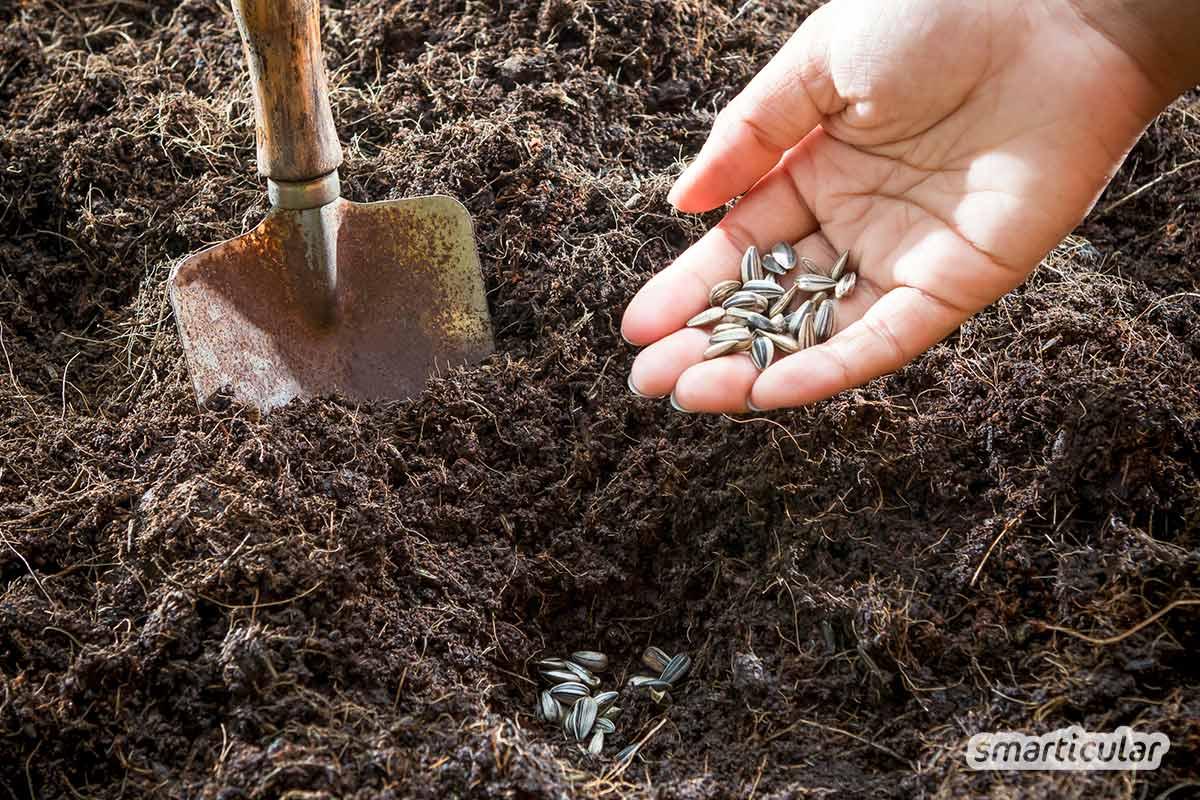 Der Gartenkalender April gibt Tipps, welche Arbeiten anstehen. Jetzt können das Hochbeet vorbereitet, Rhabarber geerntet und Rasenmäher und Grill bereit gestellt werden.