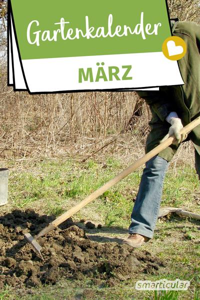 Der Gartenkalender März gibt Tipps, welche Arbeiten anstehen. Jetzt können Pflanzen vorgezogen oder ins Freiland ausgesät, das Gemüsebeet vorbereitet und die Gartenmöbel aufgefrischt werden.