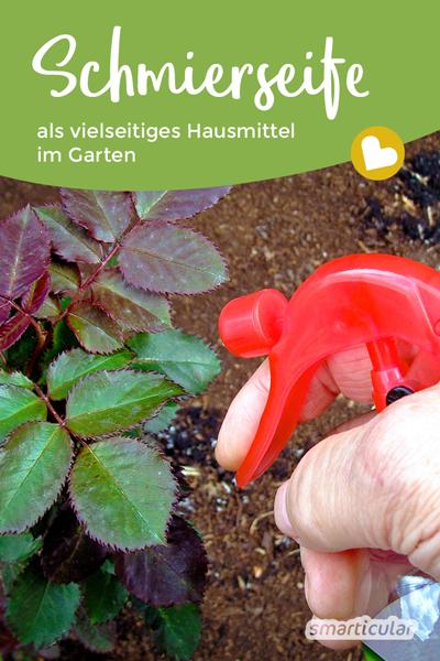 Schmierseife ist im Garten für viele Zwecke einsetzbar. Als günstiges Hausmittel hilft sie gegen Schädlinge und als Reinigungsmittel.