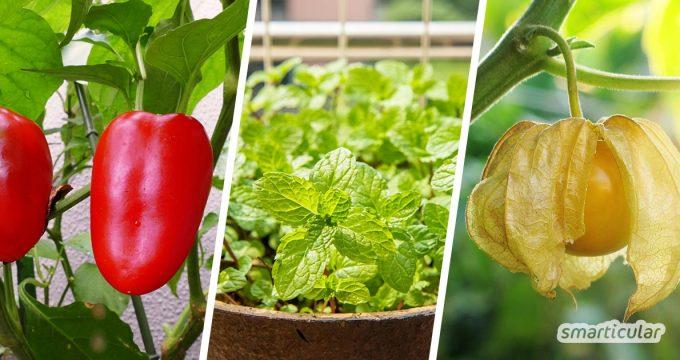 Naschen vom Naschbalkon: Mit Balkongemüse, -obst und -kräutern holst du dir kleine, frische Köstlichkeiten für zwischendurch in den Minigarten.