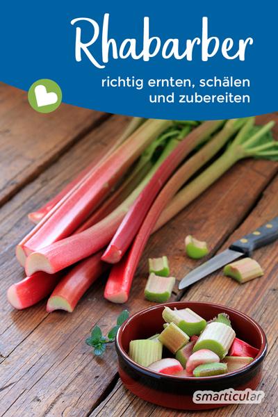 Rhabarber wächst schnell, ist gesund und leicht anzubauen. Hier erfährst du alles über die Rhabarber-Ernte, wie du ihn schälst und wie sich Rhabarber kochen lässt.
