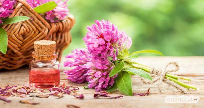 Rotklee ist reich an gesunden Inhaltsstoffen für innere und äußere Anwendungen. Er wirkt entzündungshemmend, krampflösend und lindert zahlreiche Beschwerden.
