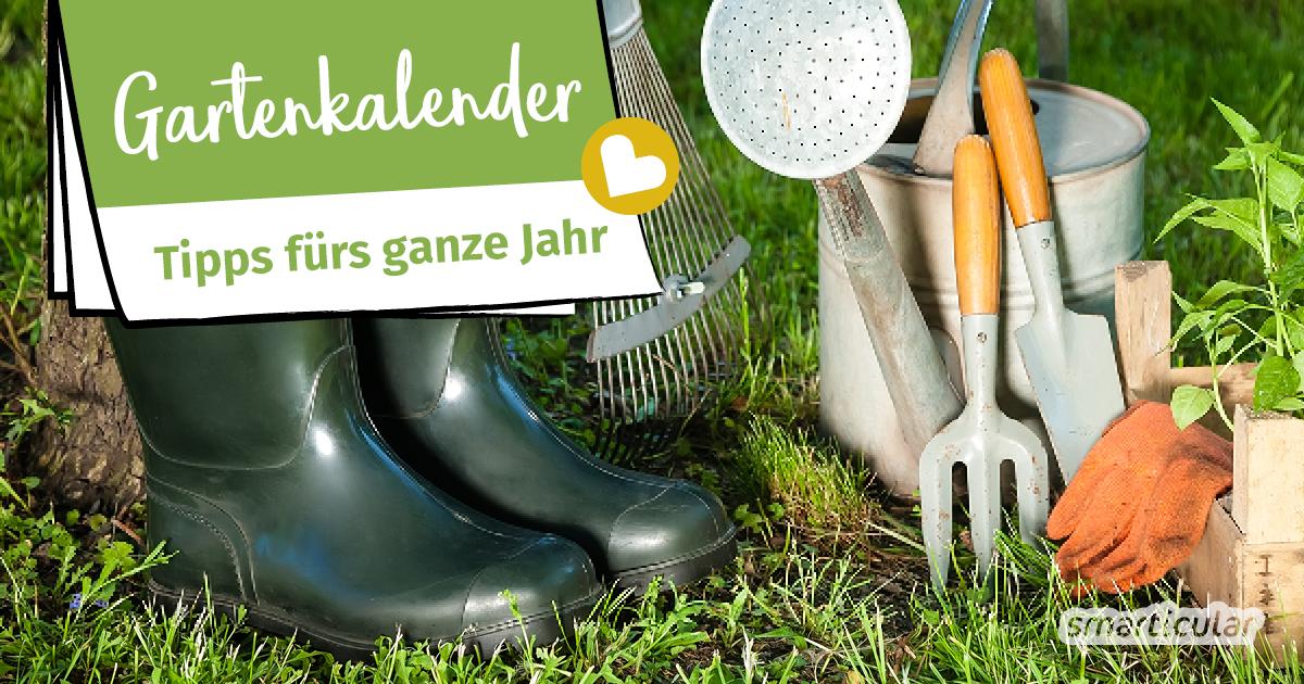 Der Gartenkalender gibt Tipps, welche Arbeiten im Frühjahr, Sommer, Herbst und Winter anstehen. Säen, pflanzen, düngen, ernten, alles zu seiner Zeit.