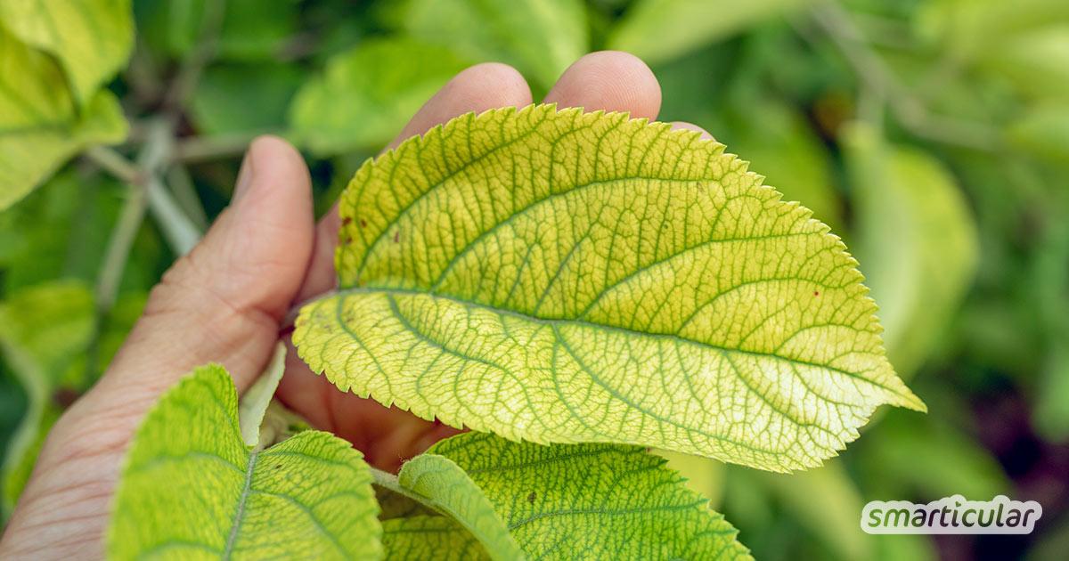 Nährstoffmangel erkennen und behandeln: so findest du heraus, was deinen Pflanzen fehlt