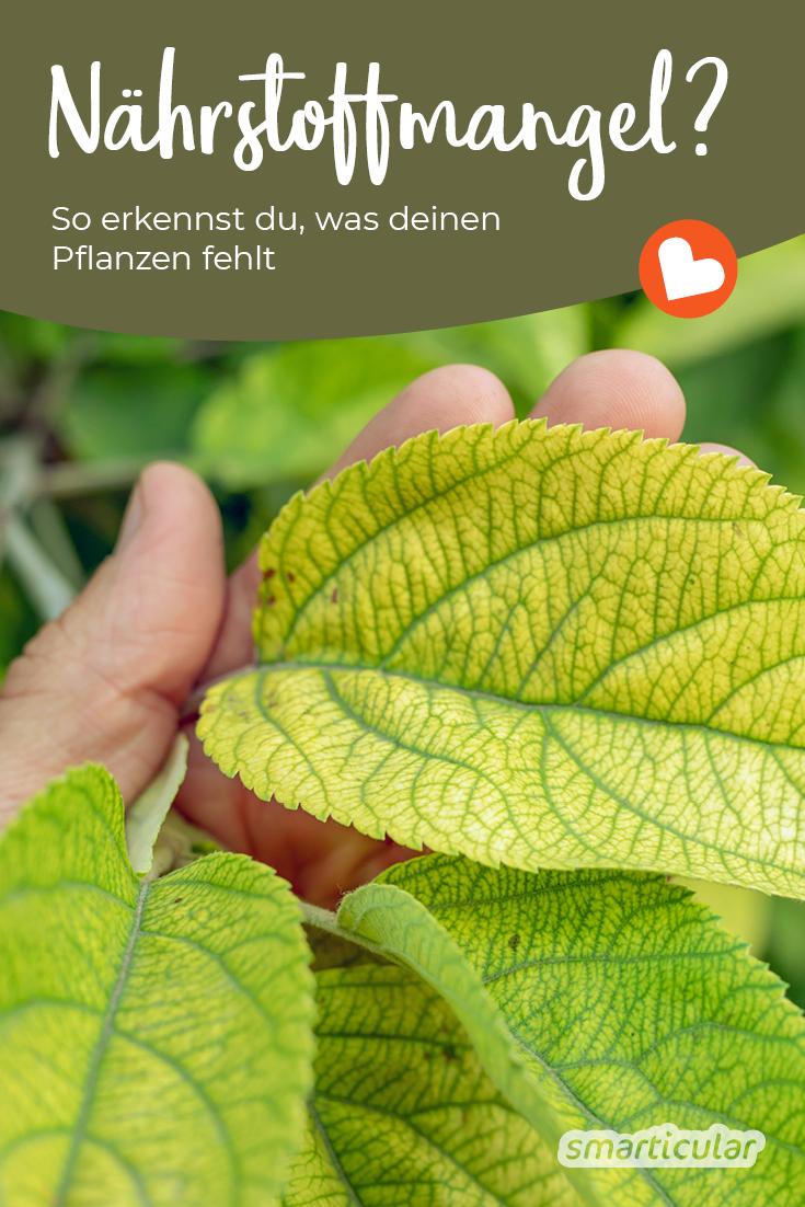 Wenn Pflanzen unter Nährstoffmangel leiden, lässt sich das an Blättern und Wachstum erkennen. Hier erfährst du, ob sie Stickstoff, Kalium oder Phosphor brauchen.