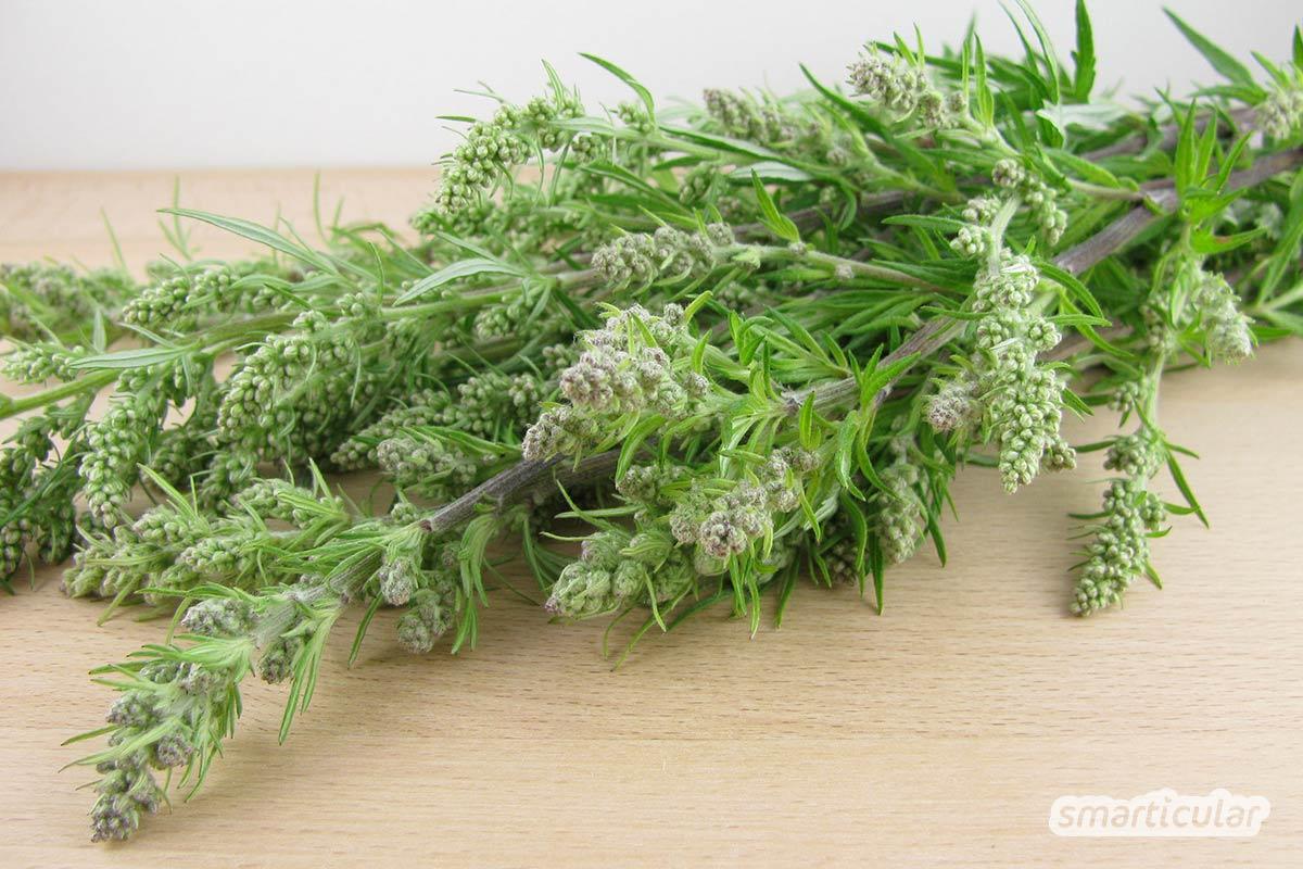 Der unscheinbare Beifuß ist eine starke Heilpflanze, die unter anderem bei Menstruationsbeschwerden und Verdauungsproblemen Linderung verschafft.