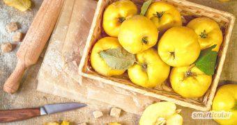 Quittengelee, Quittenbrot, Quittensaft und das gesunde Quittengel: Hier findest du köstliche und einfache Quitten-Rezepte für die gesamte Frucht.
