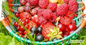 Essbare Sträucher statt langweiliger Hecken: Du kannst diese gesunden Beeren pflanzen, um im nächsten Jahr einen reichen Naschgarten zu erhalten.