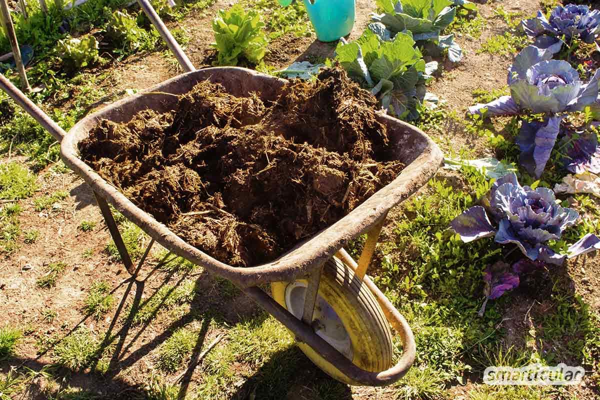 Ob du deine Pflanzen mit organischem Dünger wie Kompost, Mulch und Jauche oder besser mit mineralischem Dünger wie Gesteinsmehl versorgst, erfährst du hier.