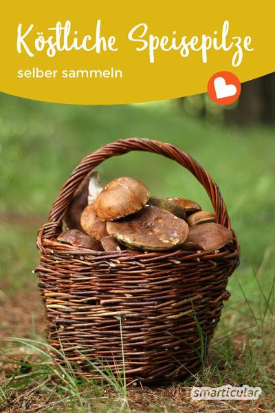 Essbare Pilze sammeln, einen schönen Tag an der frischen Luft verbringen und köstliche Pilzspeisen genießen. Mit diesen einfach zu findenden Pilzen gelingt's!