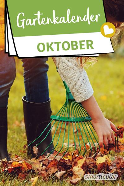 Der Gartenkalender Oktober gibt Tipps, welche Arbeiten anstehen. Jetzt können Äpfel und Birnen geerntet, Laub auf den Beeten verteilt und Beerensträucher gepflanzt werden.