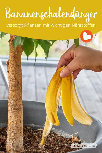 Bananenschalen als Dünger verwerten statt wegwerfen: Verarbeite sie zu wertvollem Blumendünger und versorge deine Pflanzen mit Kalium und anderen Nährstoffen.