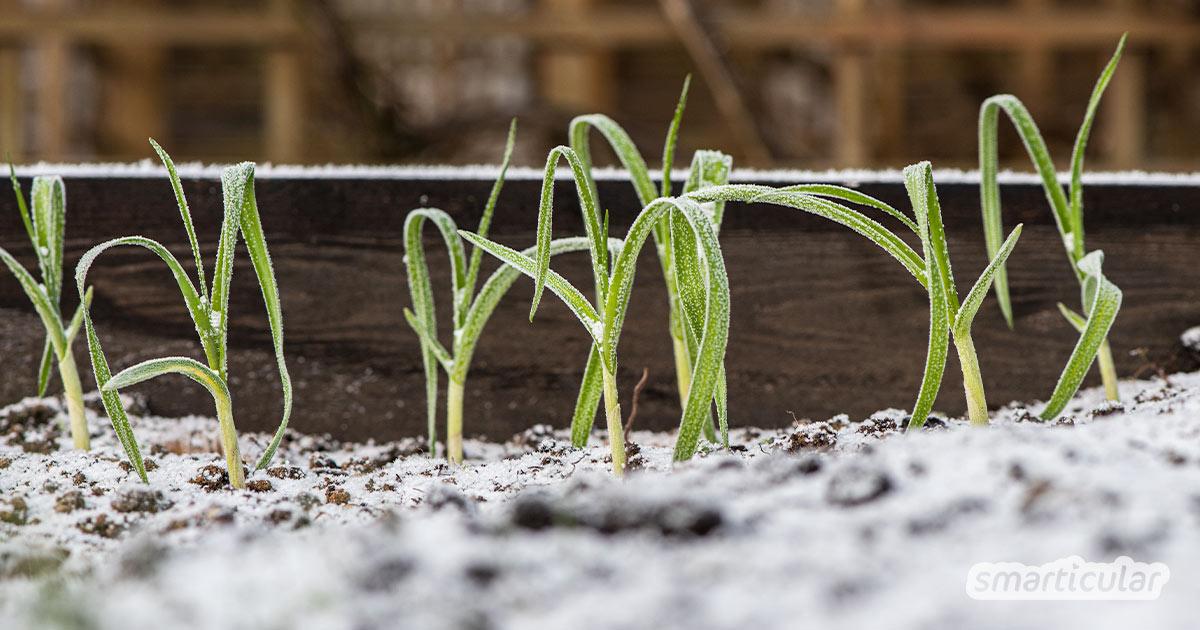 Mit diesen Tipps machst du deine Beete winterfest, bereitest sie für das neue Gartenjahr vor und versorgst dich auch in der kalten Jahreszeit mit frischem Grün.