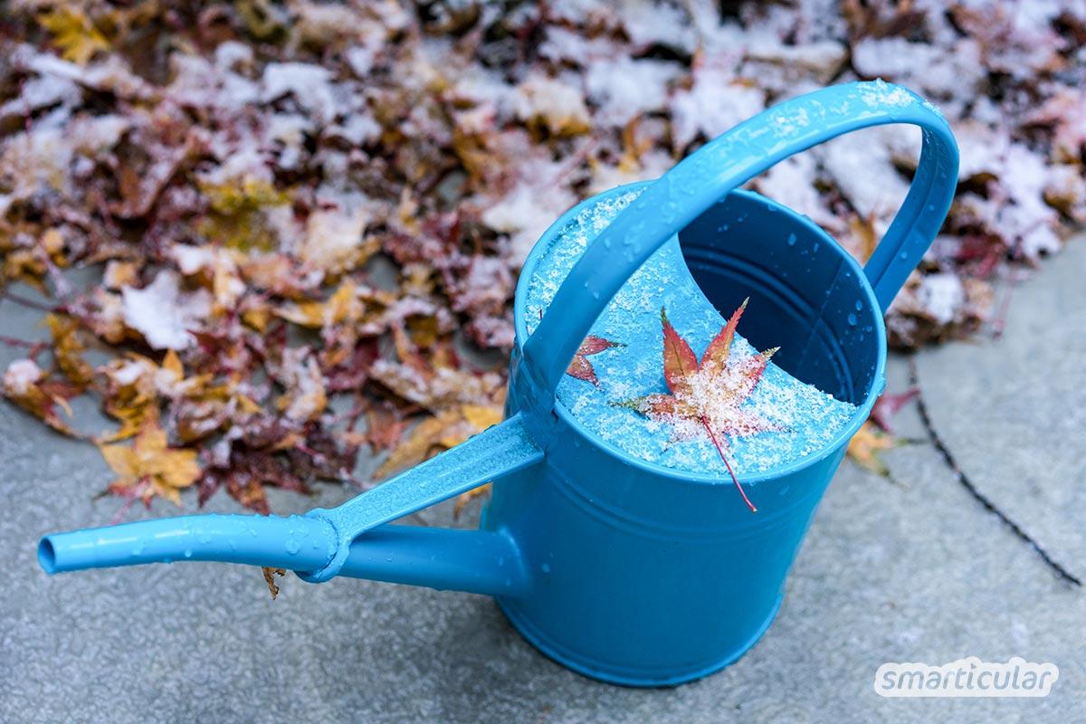 Der Gartenkalender November gibt Tipps, welche Arbeiten anstehen. Jetzt können späte Äpfel, Birnen und Quitten geerntet, Beete winterfest gemacht und ein Pflanzplan fürs nächste Jahr erstellt werden.