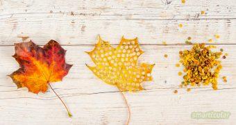 Statt aus Papier lässt sich auch aus buntem Herbstlaub wunderschönes, natürliches Konfetti selber machen - kostenlos und bestens biologisch abbaubar.