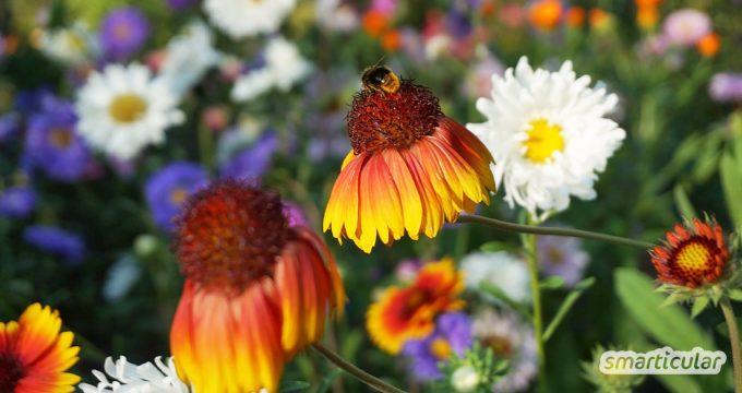 Warum der Herbst der ideale Zeitpunkt ist, um bienenfreundliche Stauden zu pflanzen und welche Sorten sich für ein insektenfreundliches Staudenbeet eignen.