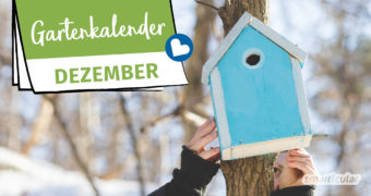 Der Gartenkalender Dezember gibt Tipps, welche Arbeiten anstehen. Jetzt können winterharte Gemüsesorten geerntet und die nächste Saison vorbereitet werden.