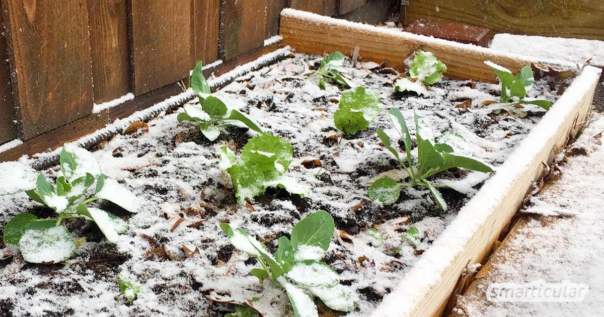 Um Wintergemüse und andere Pflanzen vor Frost zu schützen, lassen sich Naturmaterialien sowie andere plastikfreie Hilfsmittel verwenden.