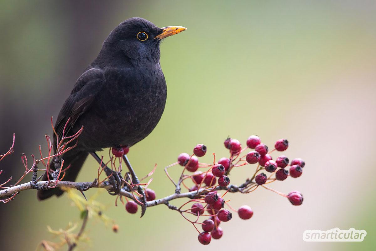 Vögel füttern macht Spaß und trägt zum Vogelschutz bei. Mit diesen Tipps hilfst du den heimischen Vögeln und erfährst, was du noch für bedrohte Arten tun kannst.