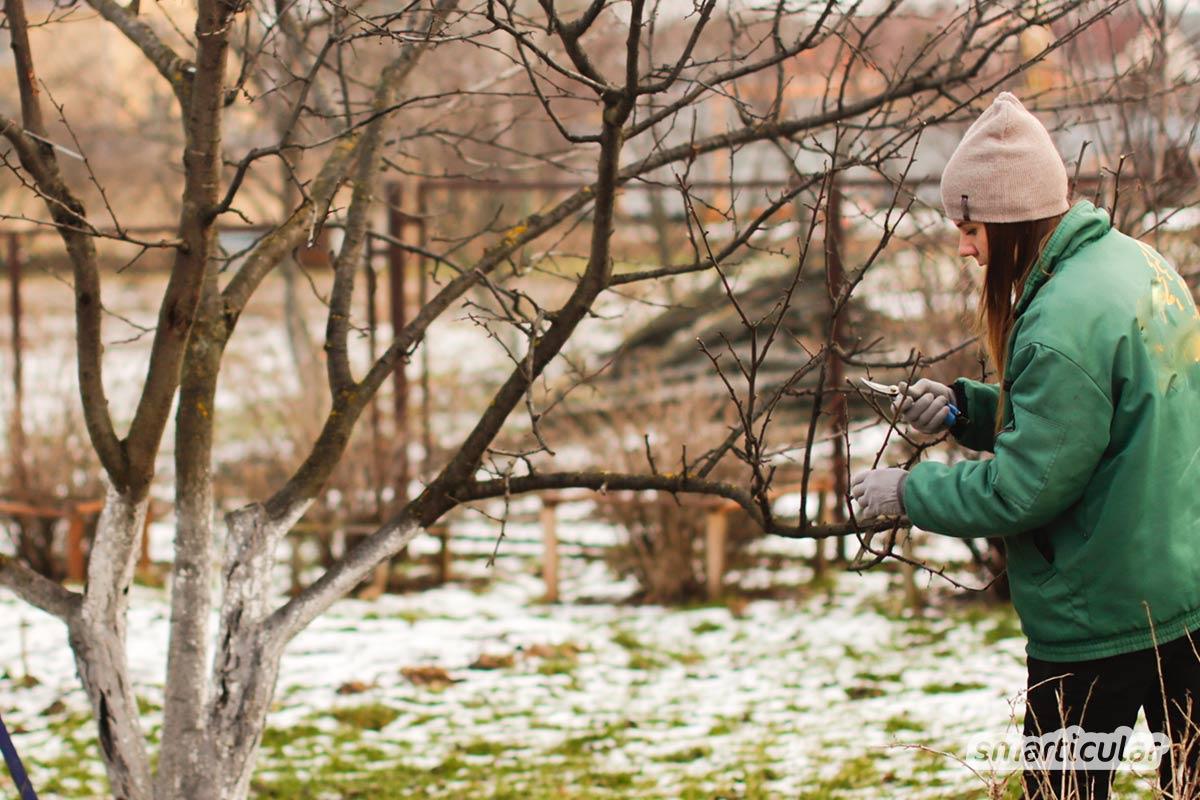 Der Gartenkalender Februar gibt Tipps, welche Arbeiten anstehen. Jetzt kannst du den letzten Kohl ernten und erste Gemüsesorten vorziehen.